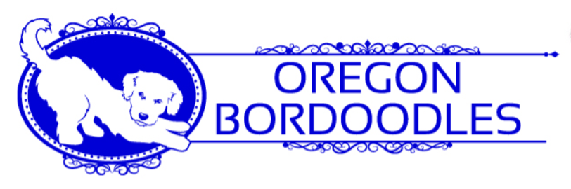 border collies for sale in Oregon
