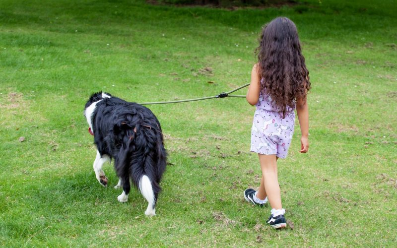 are border collies good with kids