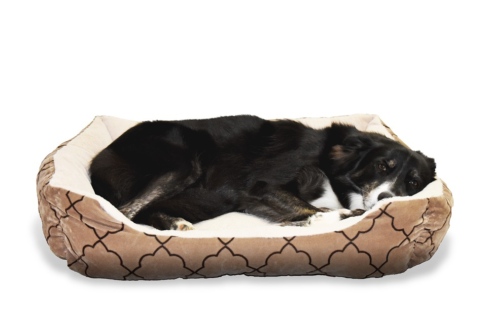 Best Dog Bed for Dogs That Chew